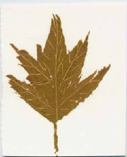 ATC_green_leaf_on_white.JPG